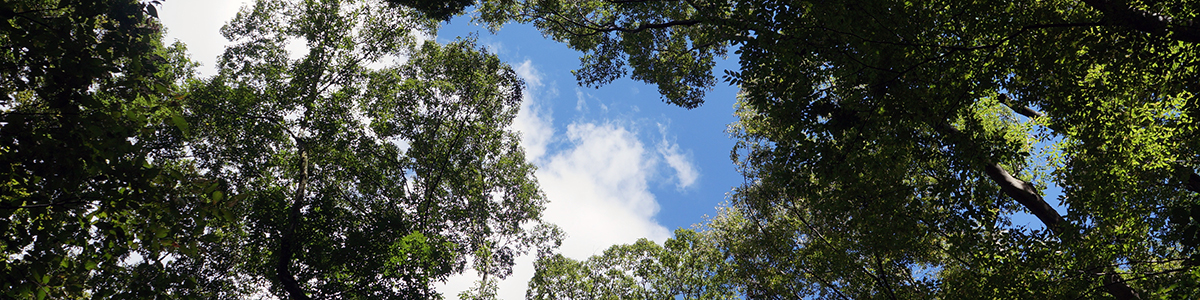 鎌倉市の木々